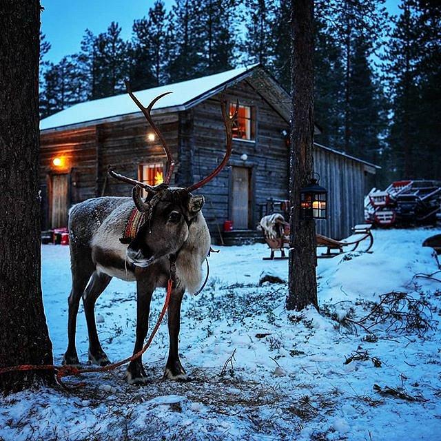 #Finland #Rovaniemi #arcticwildlife
